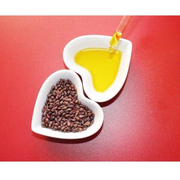 olio-vinacciolo-semi